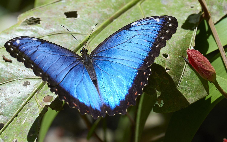 Un mondo di farfalle for Foto farfalle colorate