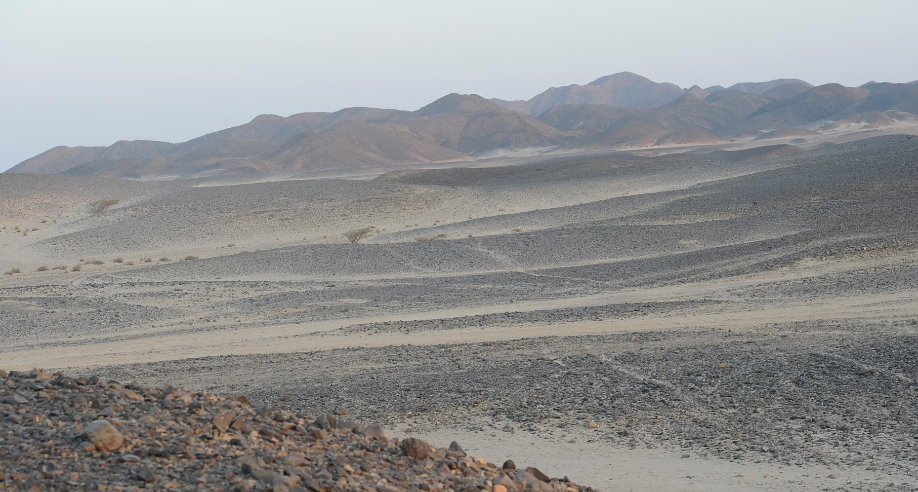 berenice deserto