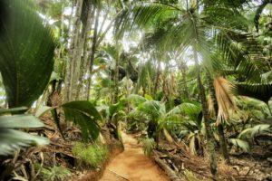 Image result for kenya piantagione di cocco