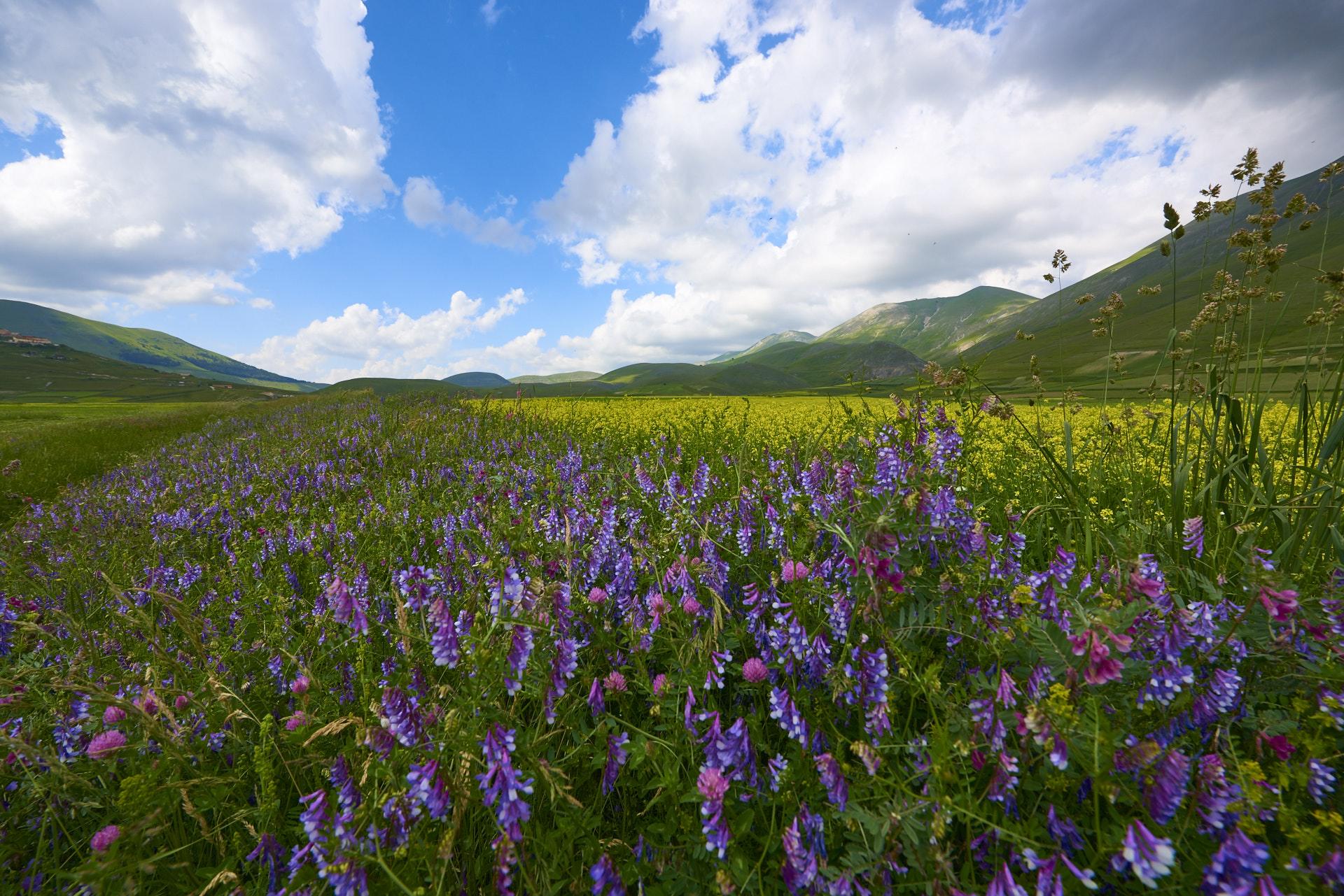 I fiori di Castelluccio