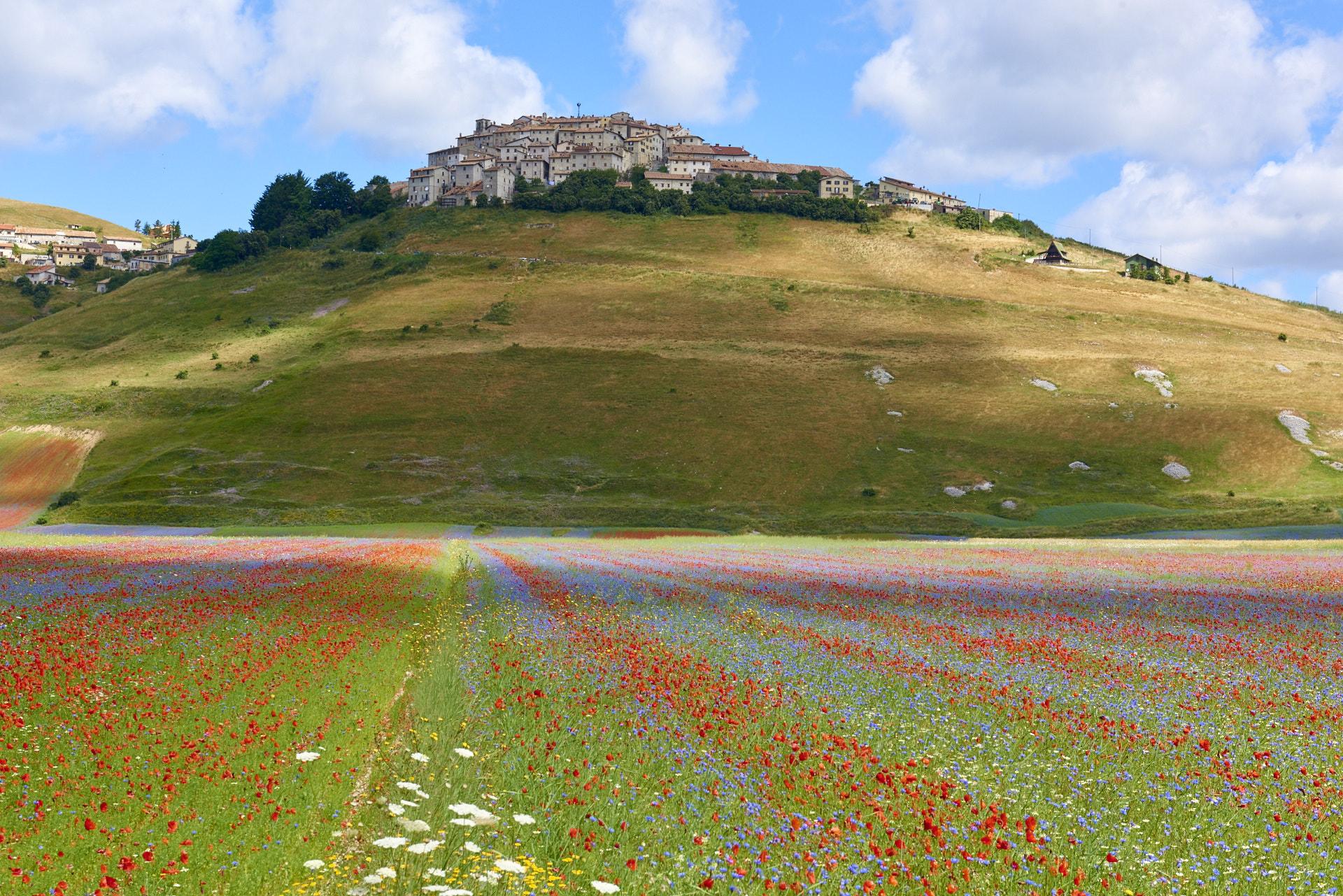 Castelluccio Fioritura 2016