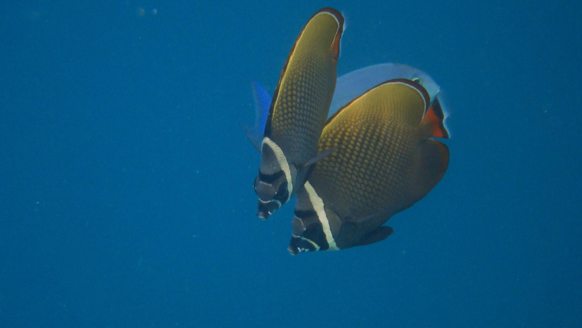 nel reef