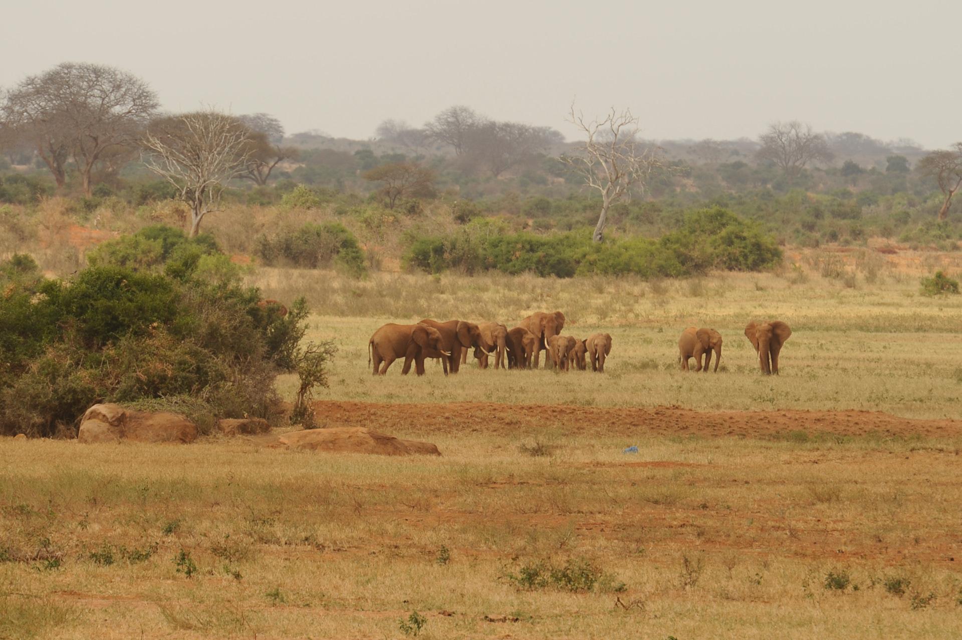 elefanti nel tsavo