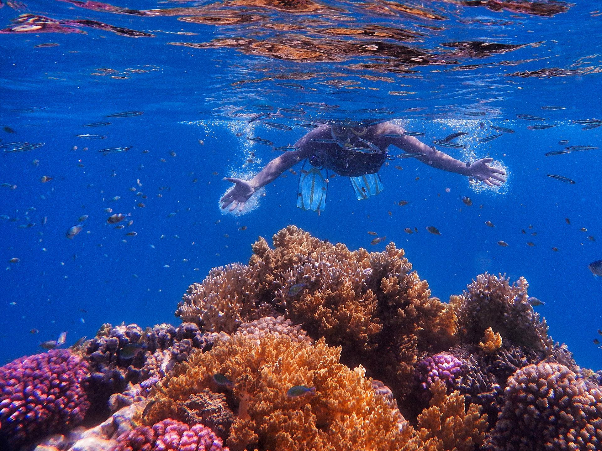 io non tocco i coralli