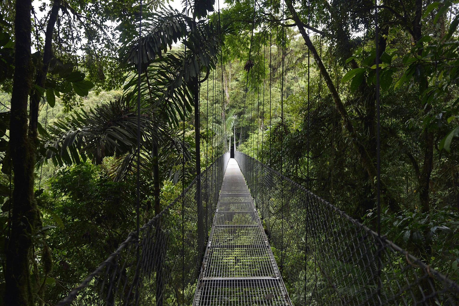 puente colgantes