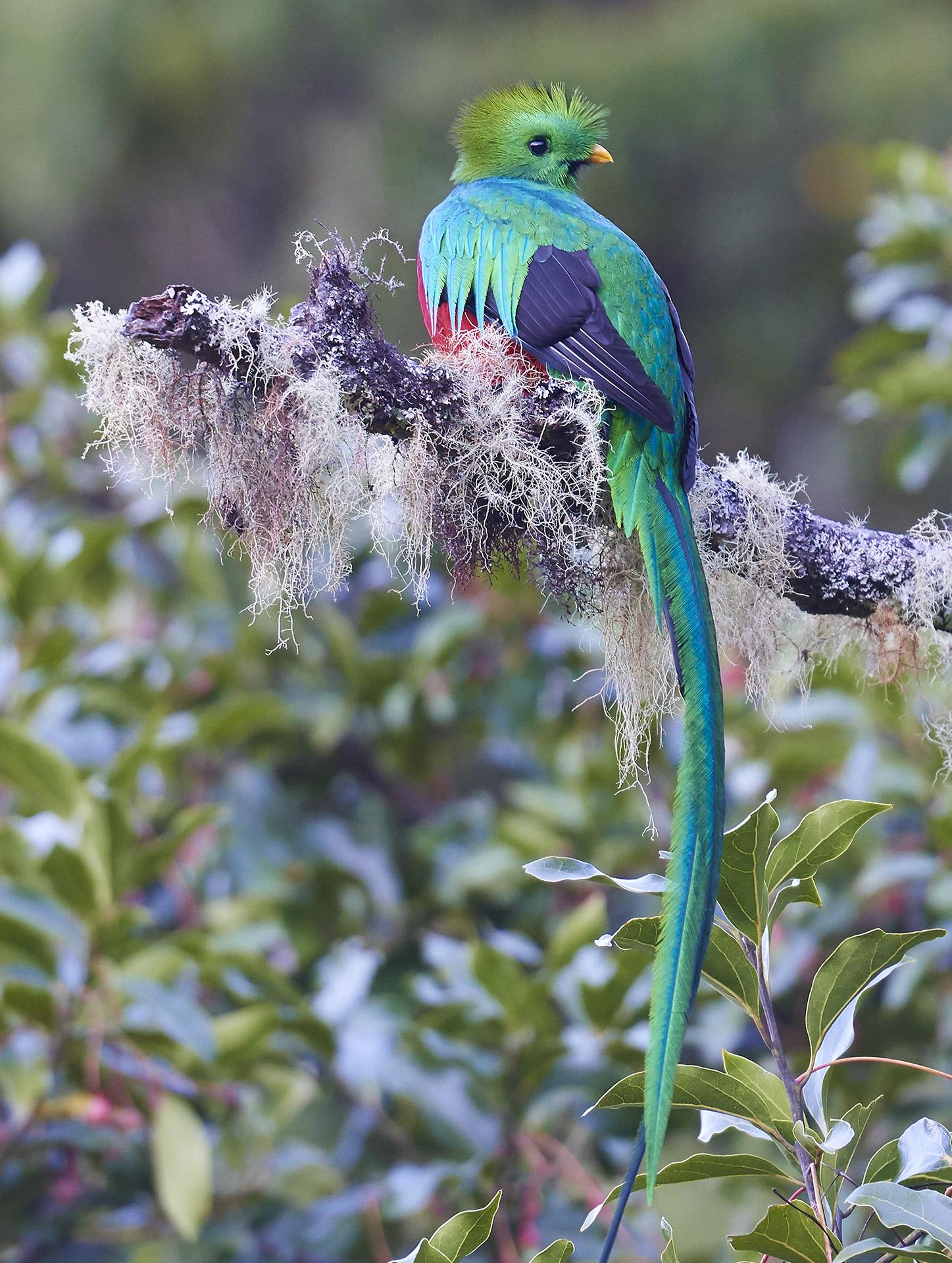 quetzal costarica