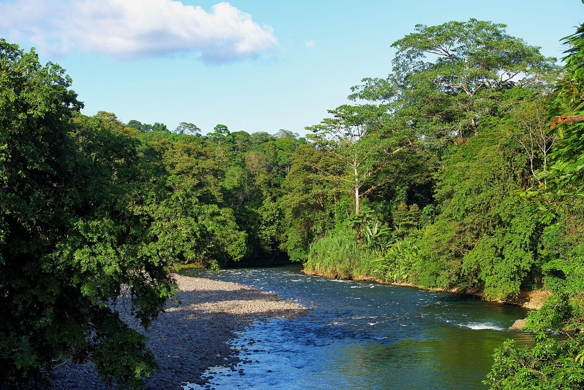 sarapiqui selva verde