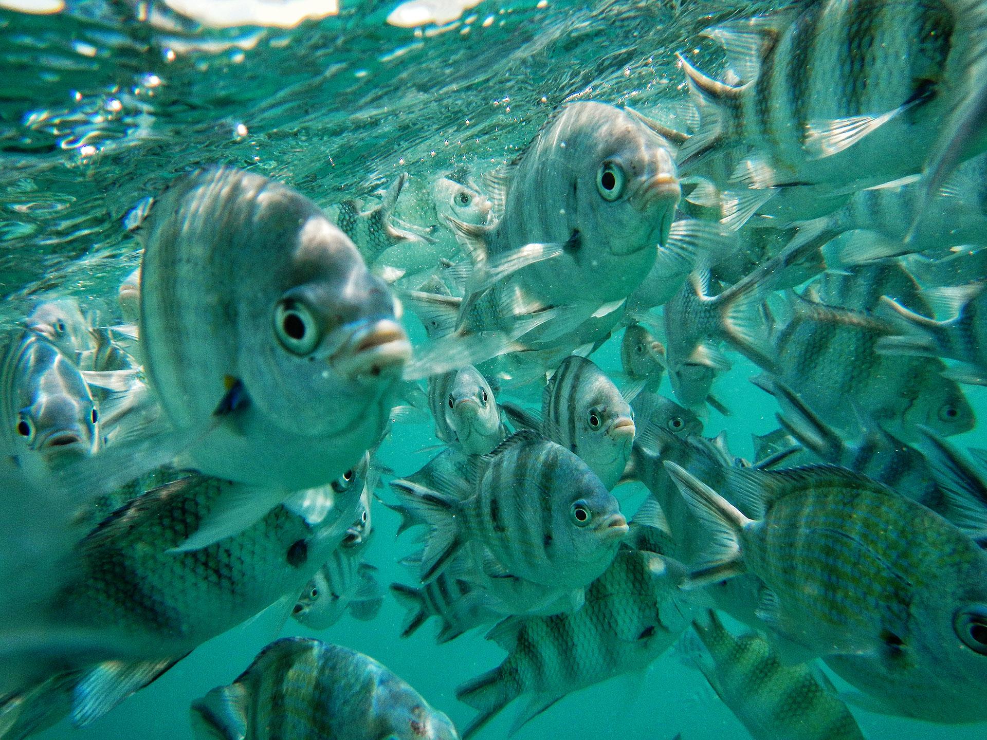 pesci seychelles