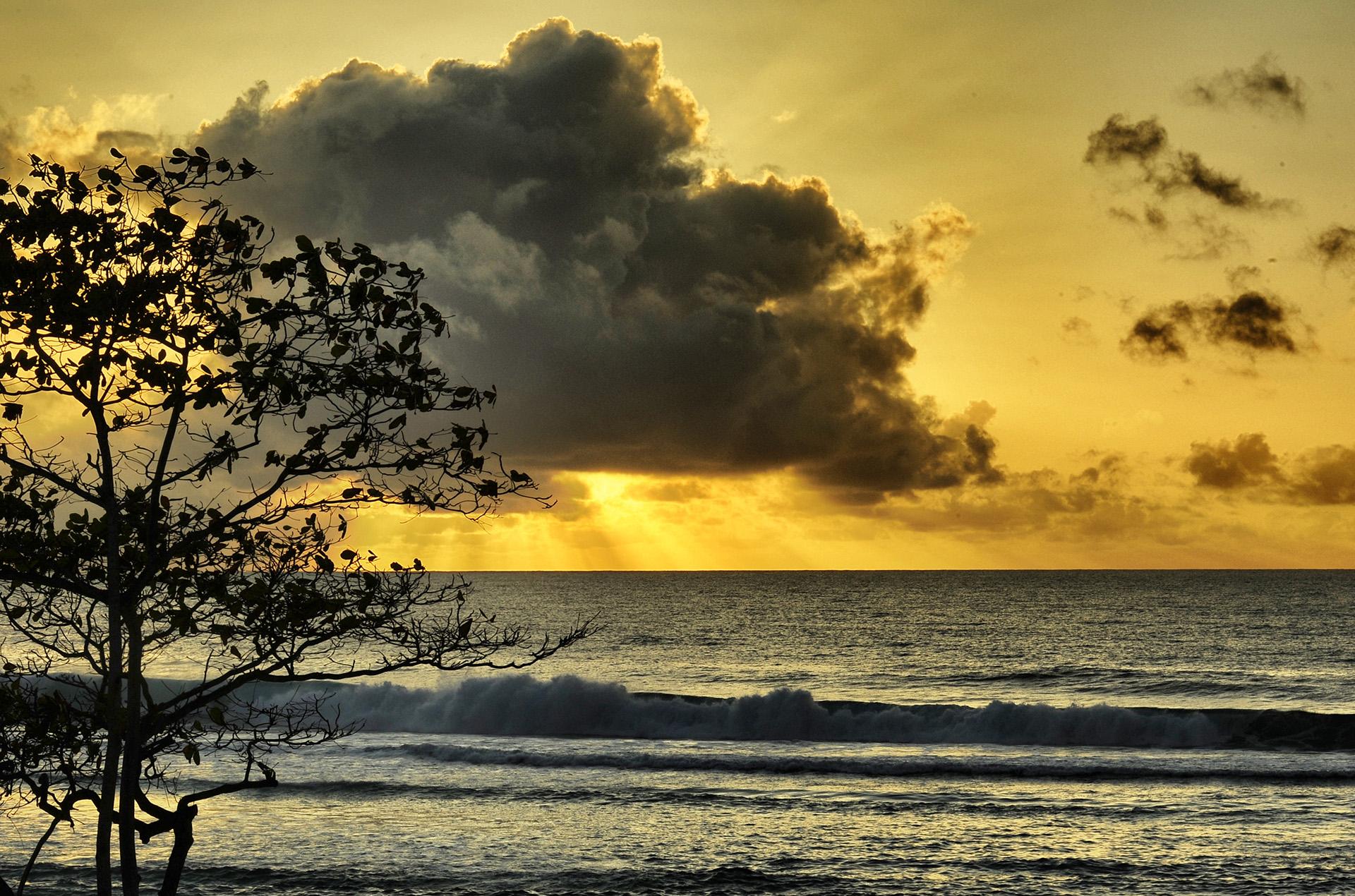 tramonto allamanda
