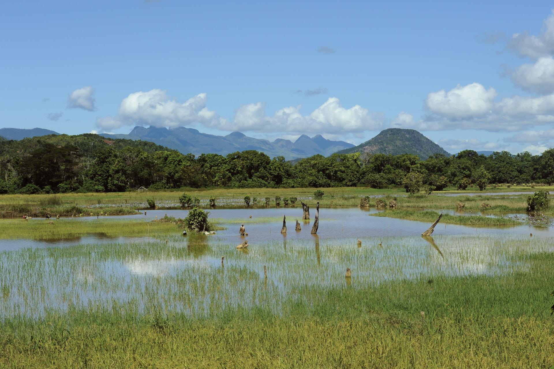 paesaggi del Madagascar